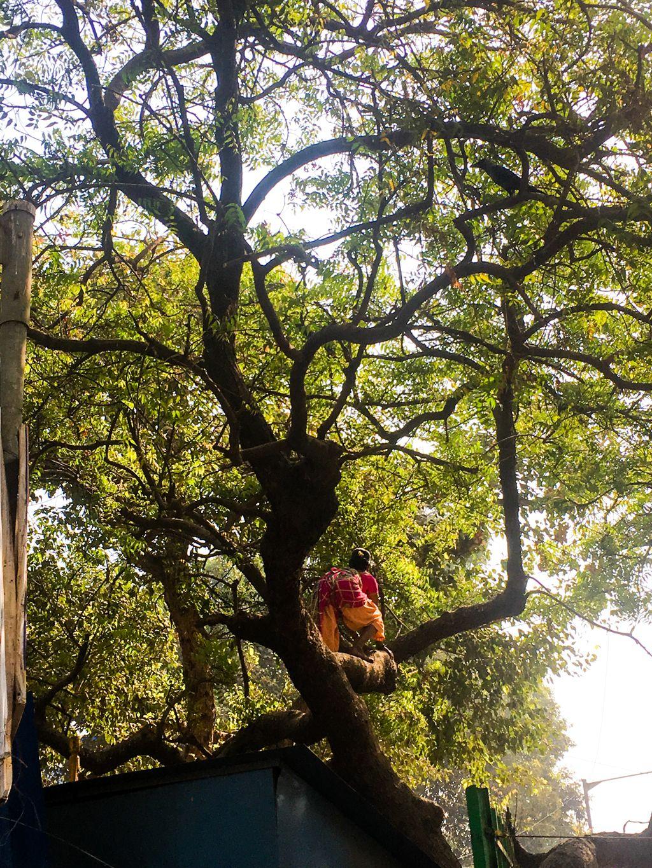 Lbs marg woman climbing a tree beach road st francis