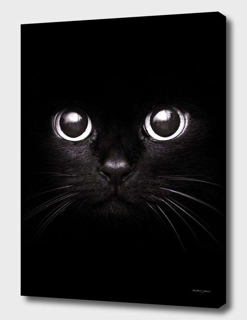«The Black Cat» Canvas Print by Mikhail Zhirnov - Numbered Edition from $59 | Curioos