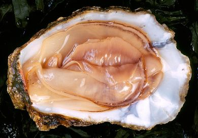 Why oysters are an aphrodisiac