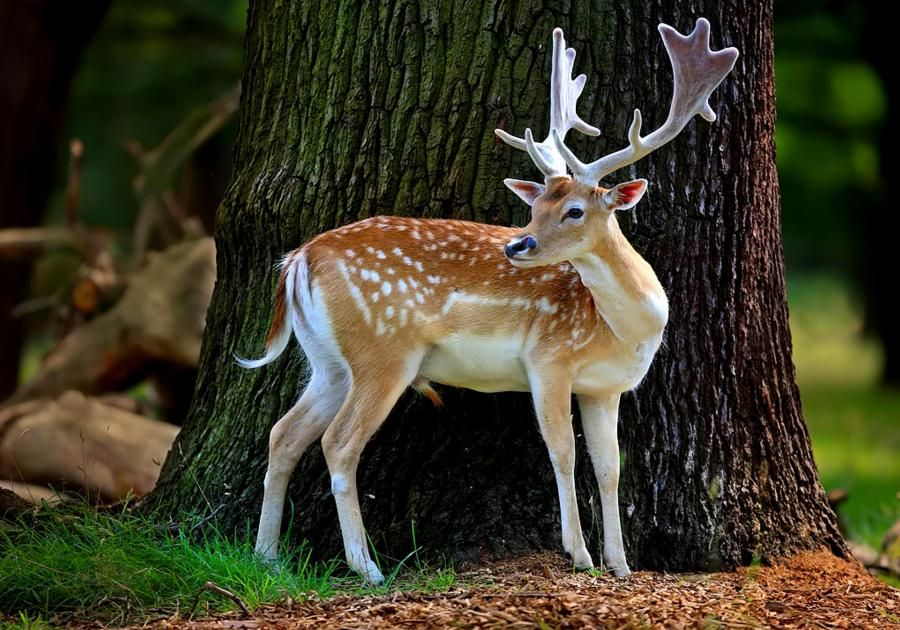 Pin On Beautiful Animals