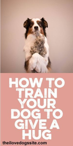 How To Train Your Dog To Give A Hug Training Your Dog Dog