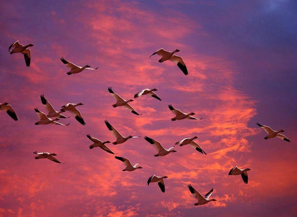 Pin de Rubén Darío Zapata Gómez en PAISAJES | Aves volando, Pájaros  volando, Fotos de aves