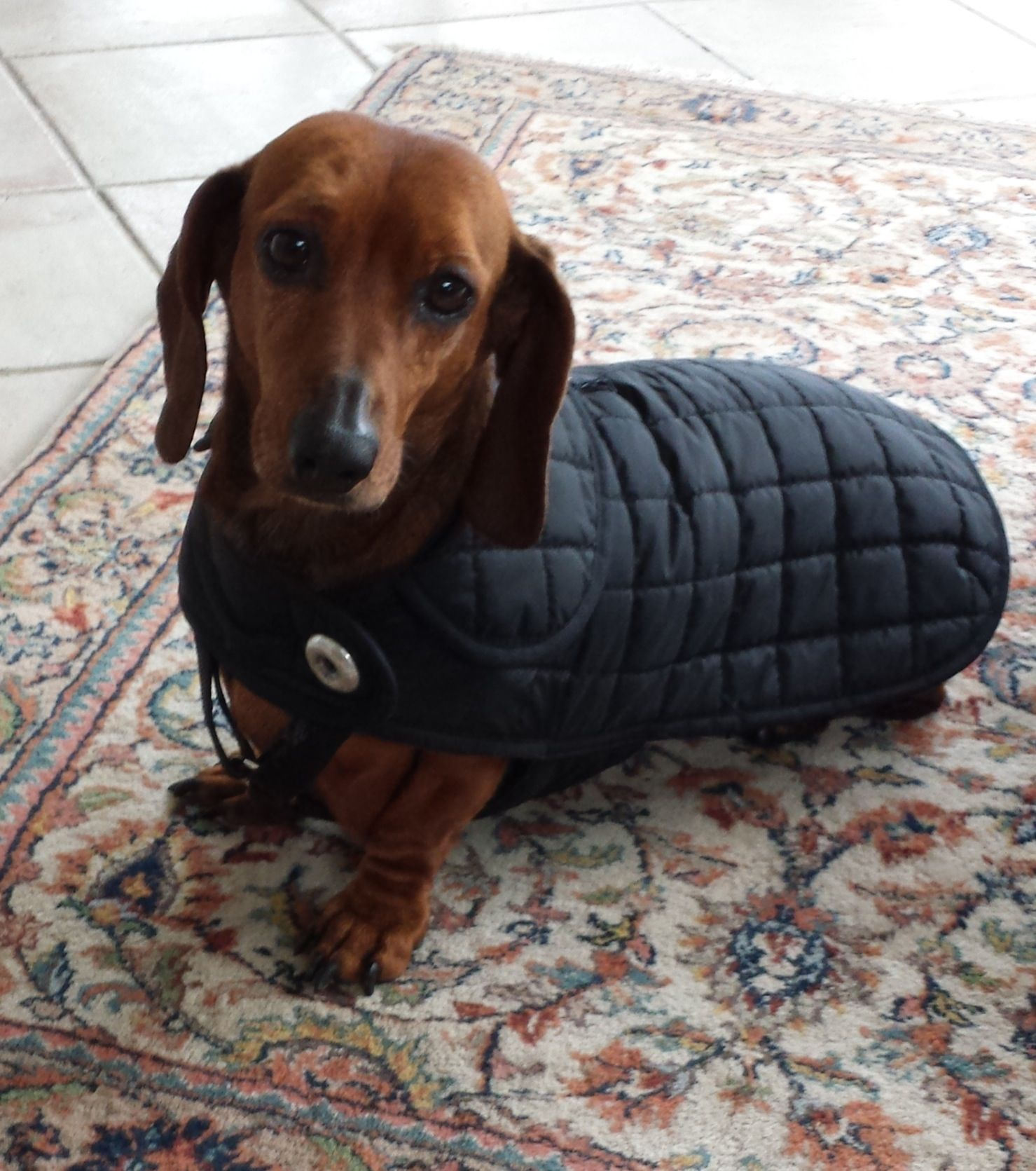 Pin By Val Kent On Dachshunds Dachshund Pets Dogs