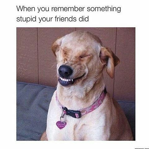 ce67bff490b6adeab21be142718d63c7 funny dog meme credit @memescorner note pinned from the,Smiling Dog Meme