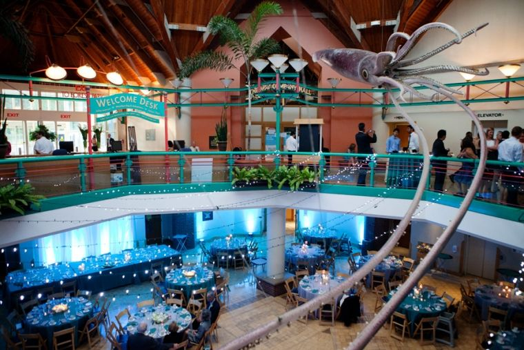 St Louis Zoo Living World Wedding Reception Ryan Gladstone