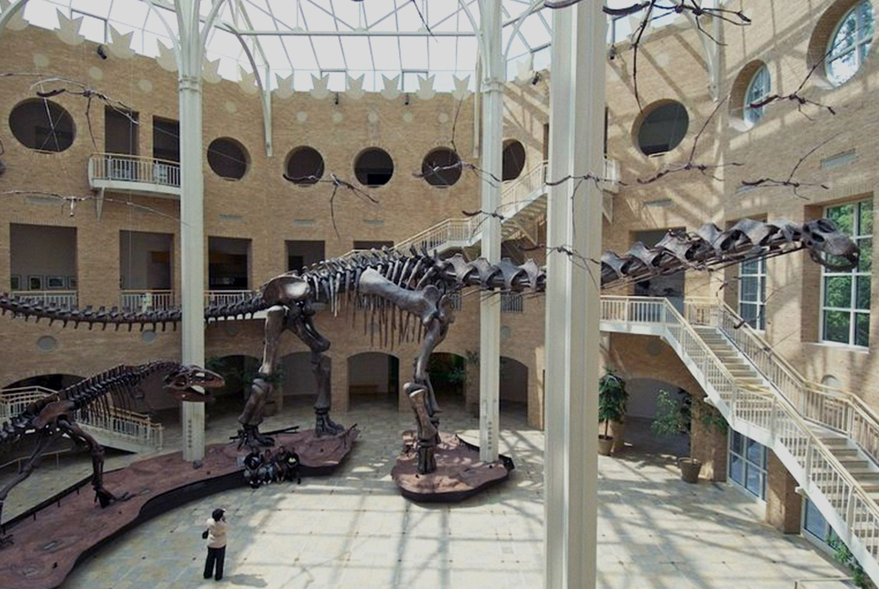 Natural History Museum Dinosaurs - Google