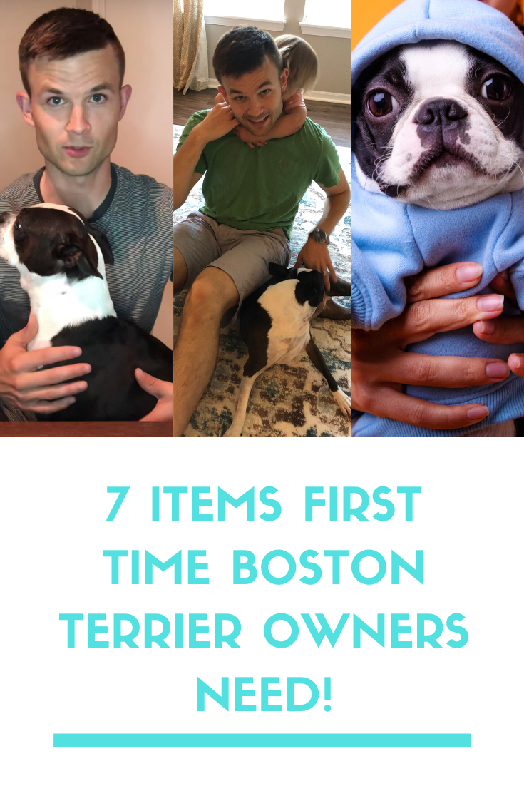 9 Items Every First Time Boston Terrier Owner Needs Boston Terrier Society Boston Terrier Owner Boston Terrier Terrier