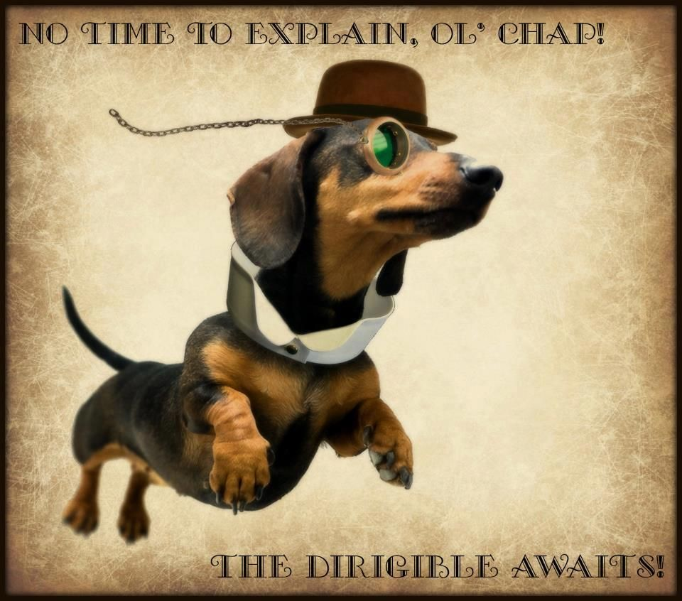 SQUEE! An entire post of pictures of Steampunk dogs!!!