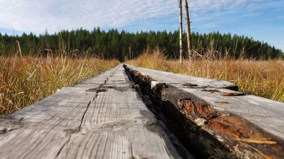 Pitkospuut liian kalliita – kivituhkapolut yleistyvät ...