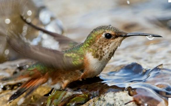 Foto Google Fotos Aves Rapaces Aves Animales Y Mascotas