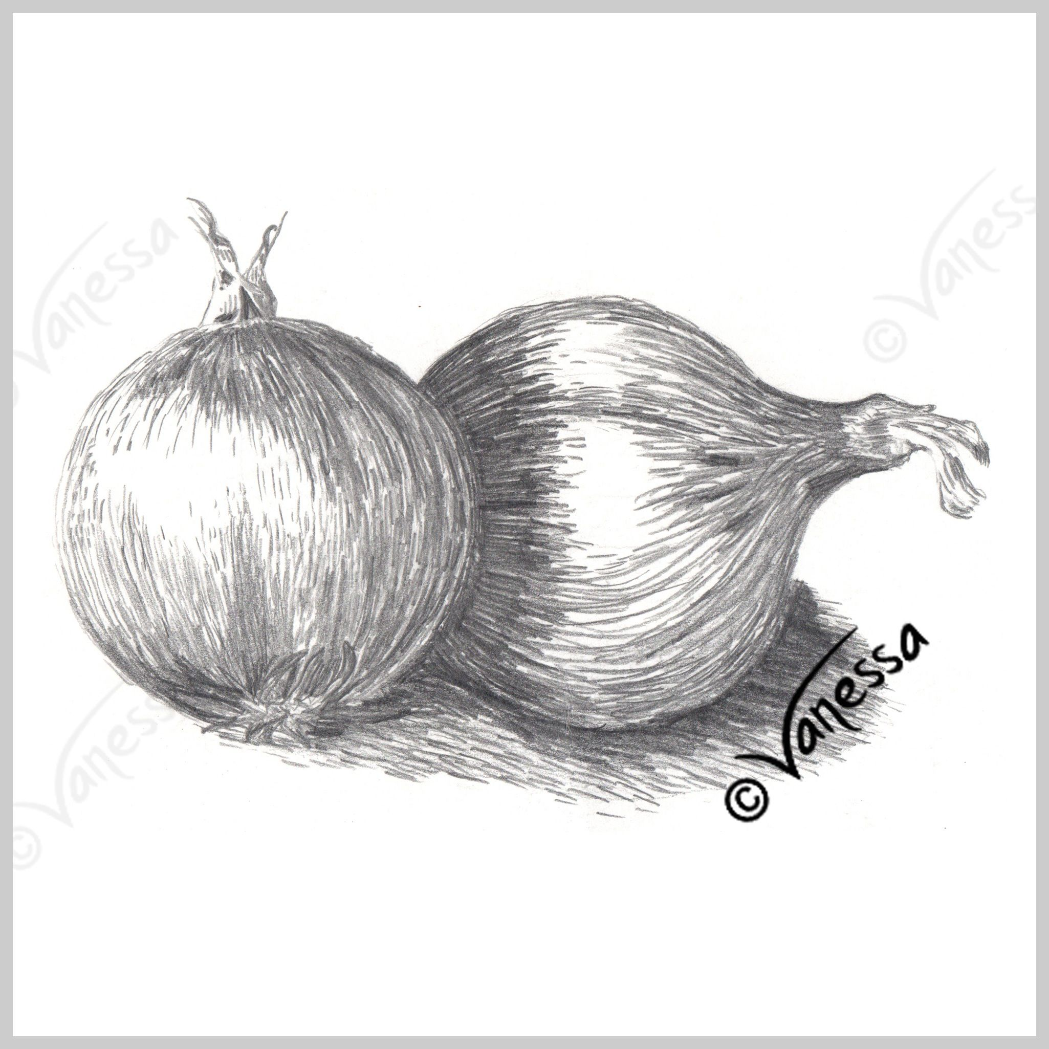 Onions still life study pencil drawing art original artwork realism painting drawing kitchen wall art food healthy eating diet fresh vegetables fruit home