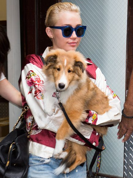 Miley Cyrus gives her pup Emu a lift while out in New York's Tribeca neighborhood.
