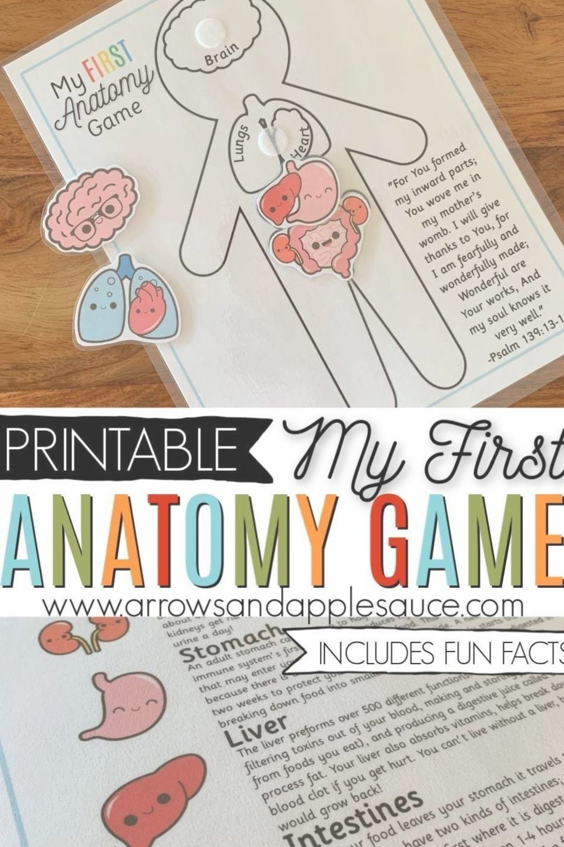 Learning About The Human Anotomy Is Fun And Easy For Kids With My First Anatomy Game Identify Ma Preschool Science Human Body Activities Preschool Activities [ 1744 x 1163 Pixel ]