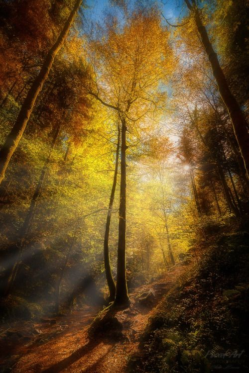 Rays of Light II | by StefanBossow