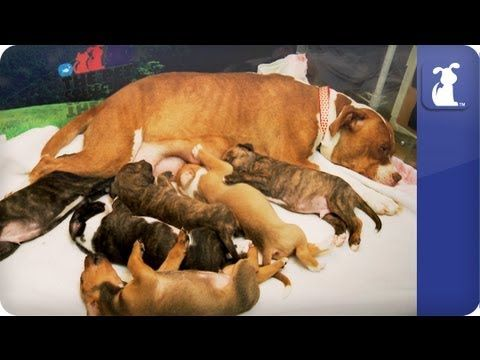 The Litter with Sharon Osbourne - Episode 2 Please spay or neuter your dogs