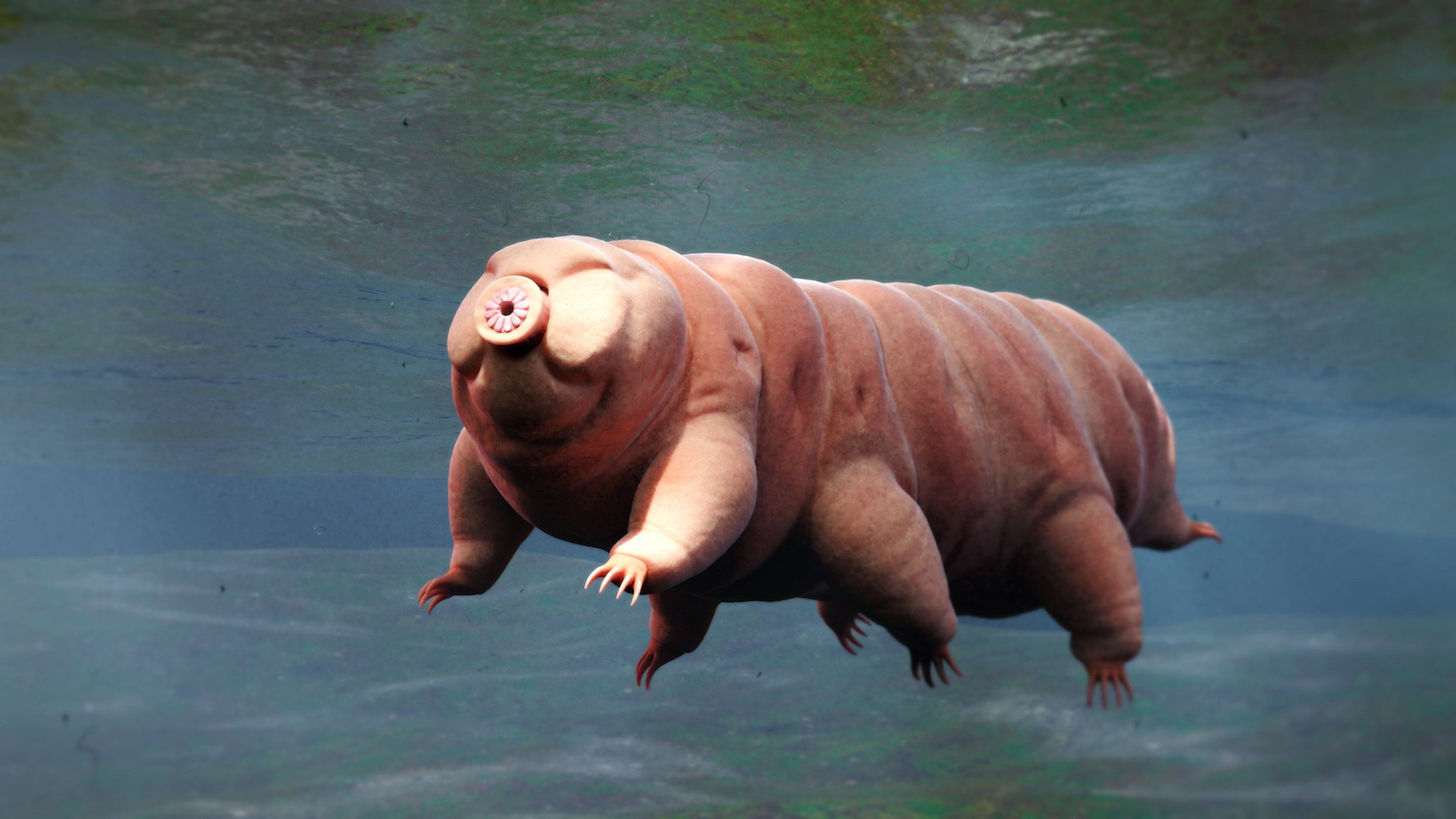 How Long Do Tardigrades Live? Weird animals, Tardigrade