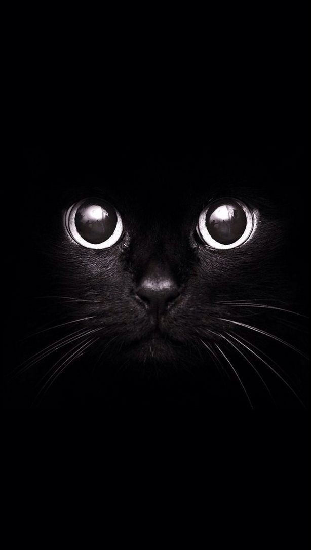 Pin En Gatos