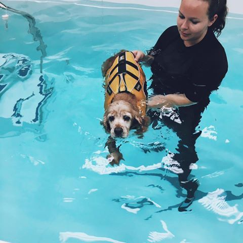 Sunny's first rehab session in the pool! #tripawds
