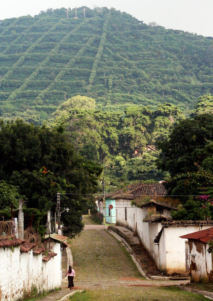 Coffee plantations in El Salvador