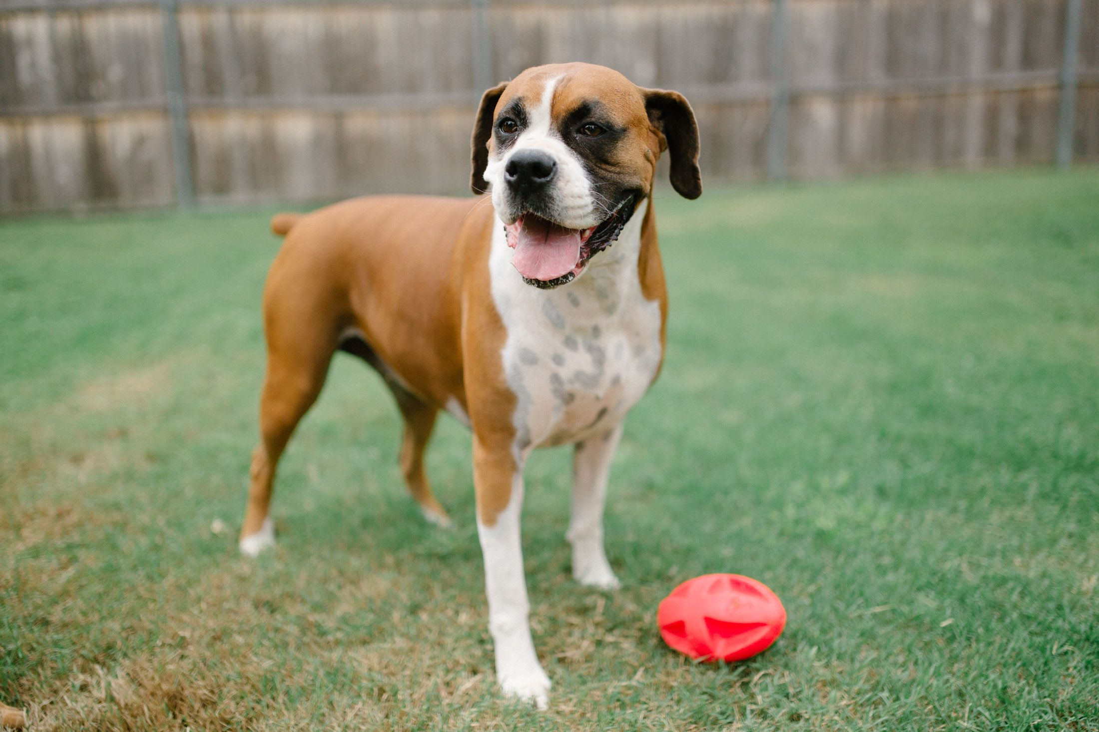 A Dog Subscription Box For Chewers Tough Dog Toys Http
