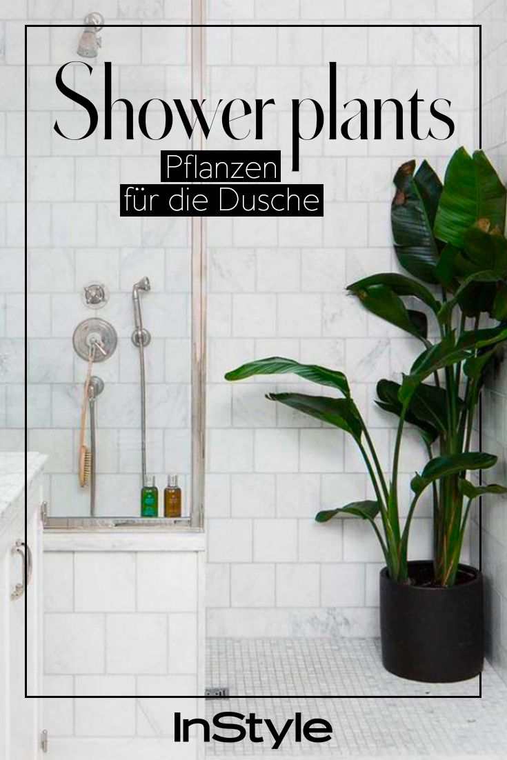 Darum Solltest Du Jetzt Pflanzen In Der Dusche Haben Deko Furs Bad Pflanzen Furs Bad Und Wohnung Pflanzen