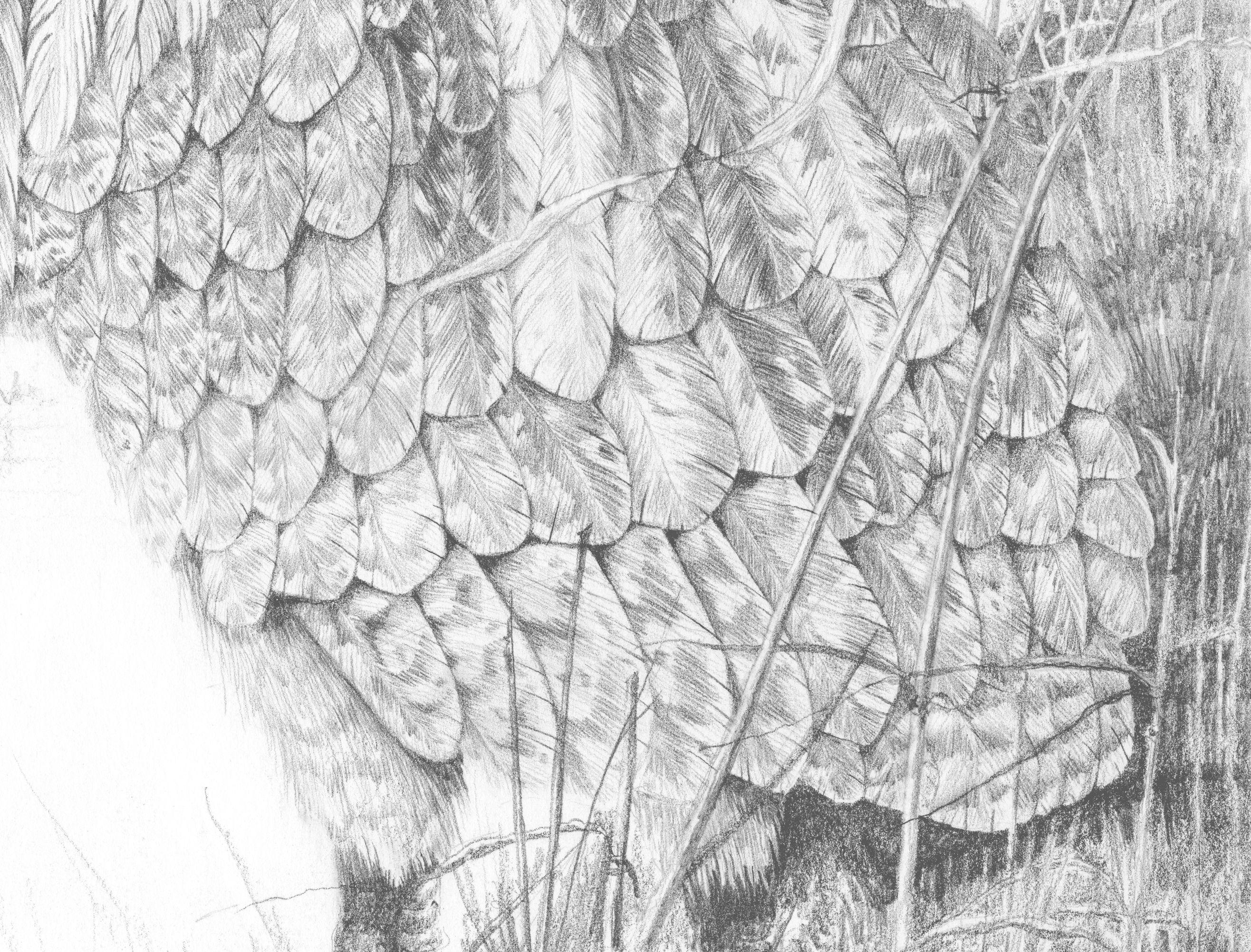 Detail taken from bird artist Mark Dean's Bittern picture. #birdart #birdartist #markdean #bittern #feather #pencildrawing #detail
