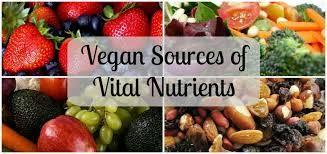 Image result for vegan collage