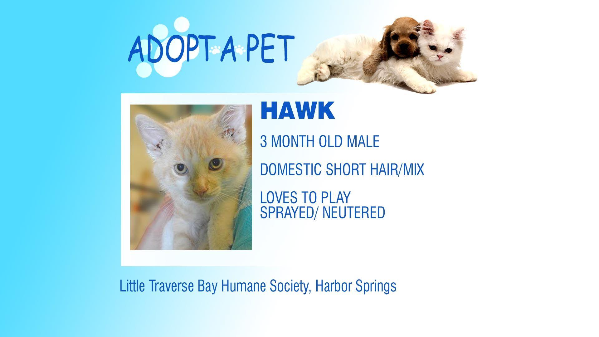 Adopt A Pet Tuesday Aquilla Winchester Hawk Pets Adoption