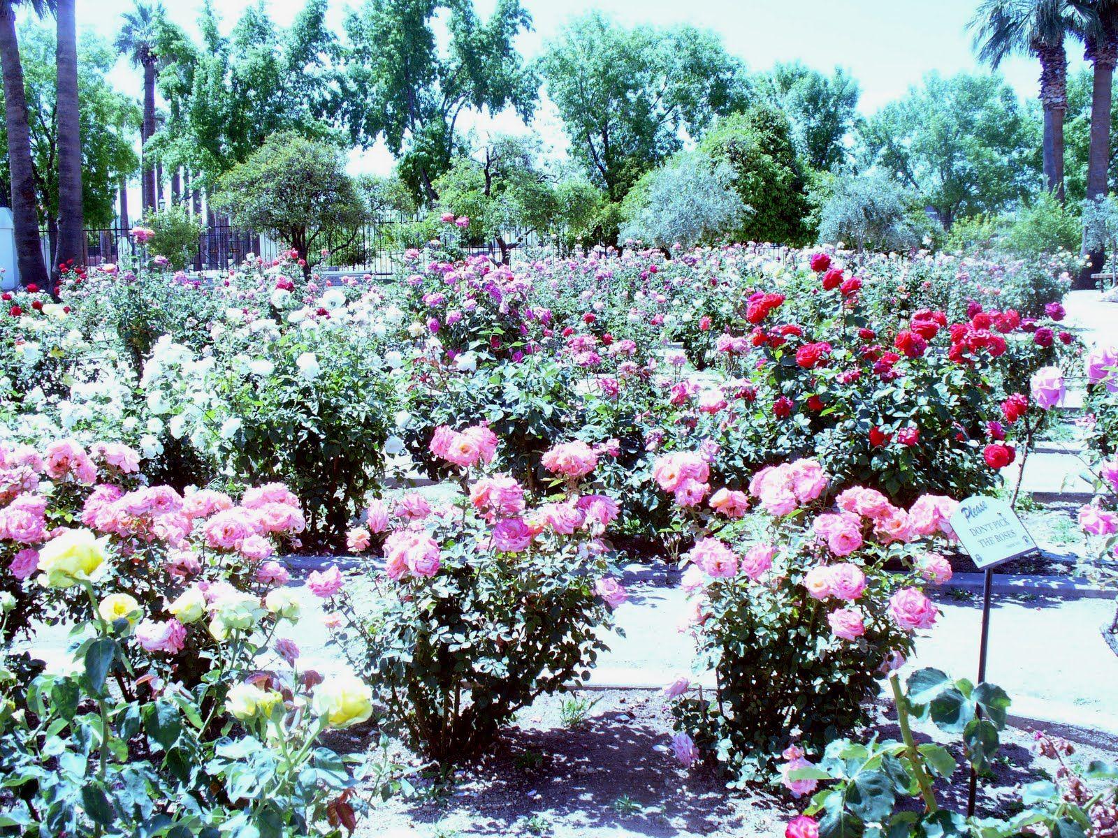 Rose Garden Historic Sahuaro Ranch