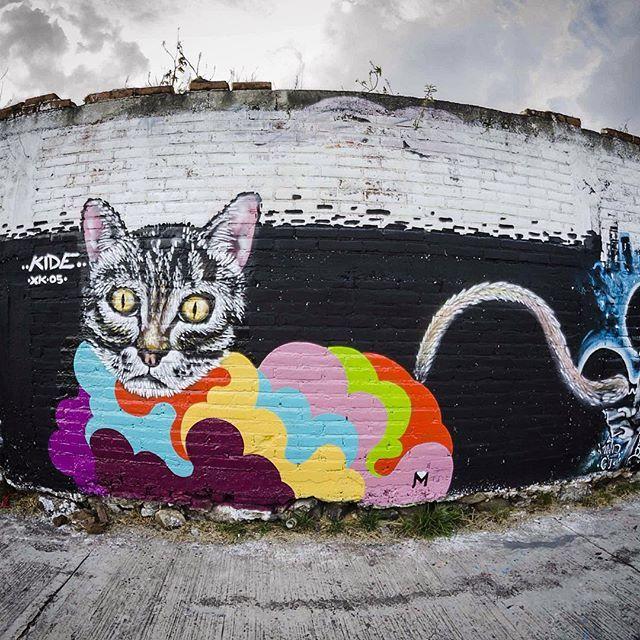 El de la expo graffiti #cat #streetart #kide #colors #gato #graffiti #moroleon #wall #aerosolart