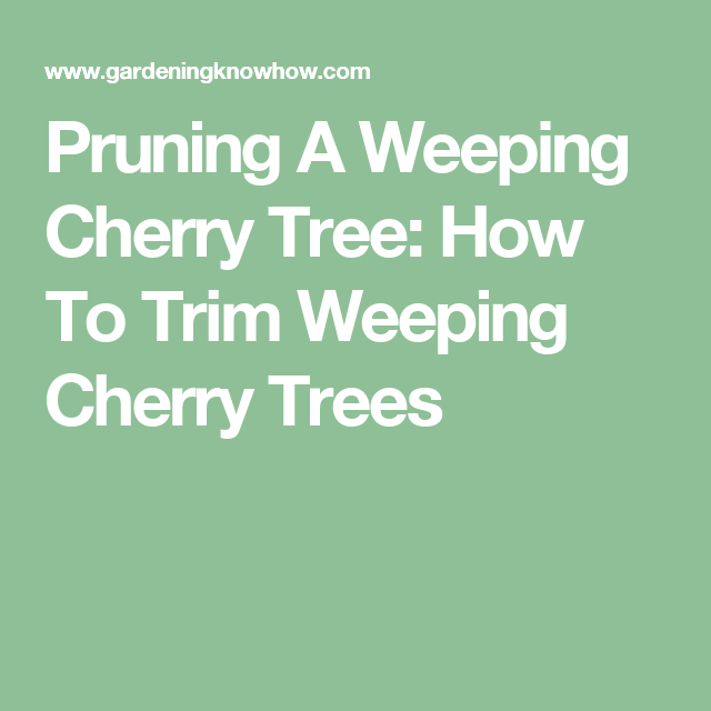 Pruning A Weeping Cherry Tree How To Trim Weeping Cherry Trees Weeping Cherry Tree Cherry Tree Prune