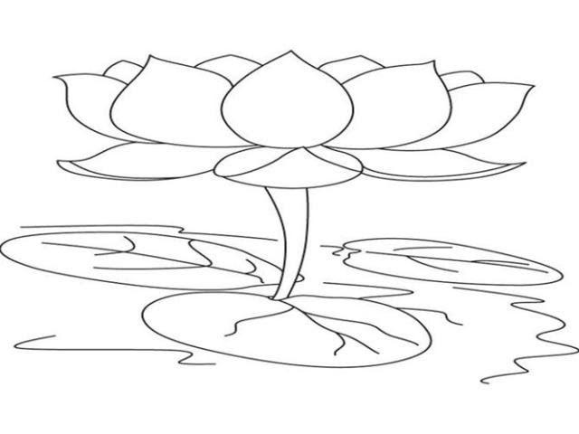 30 Lukisan Bunga Teratai Yang Mudah Sketsa Bunga Sketsa Bunga Teratai Yg Mudah Download Rongga Udara Teratai Definisi H Di 2020 Bunga Teratai Lukisan Bunga Bunga