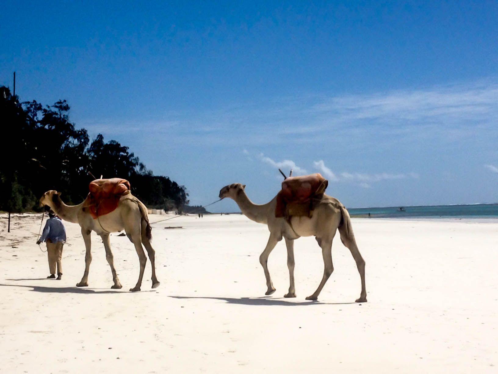 True Nomads Blog True Nomads Africa, Remote work, Animals