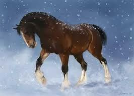 clydesdale horse - Google Search