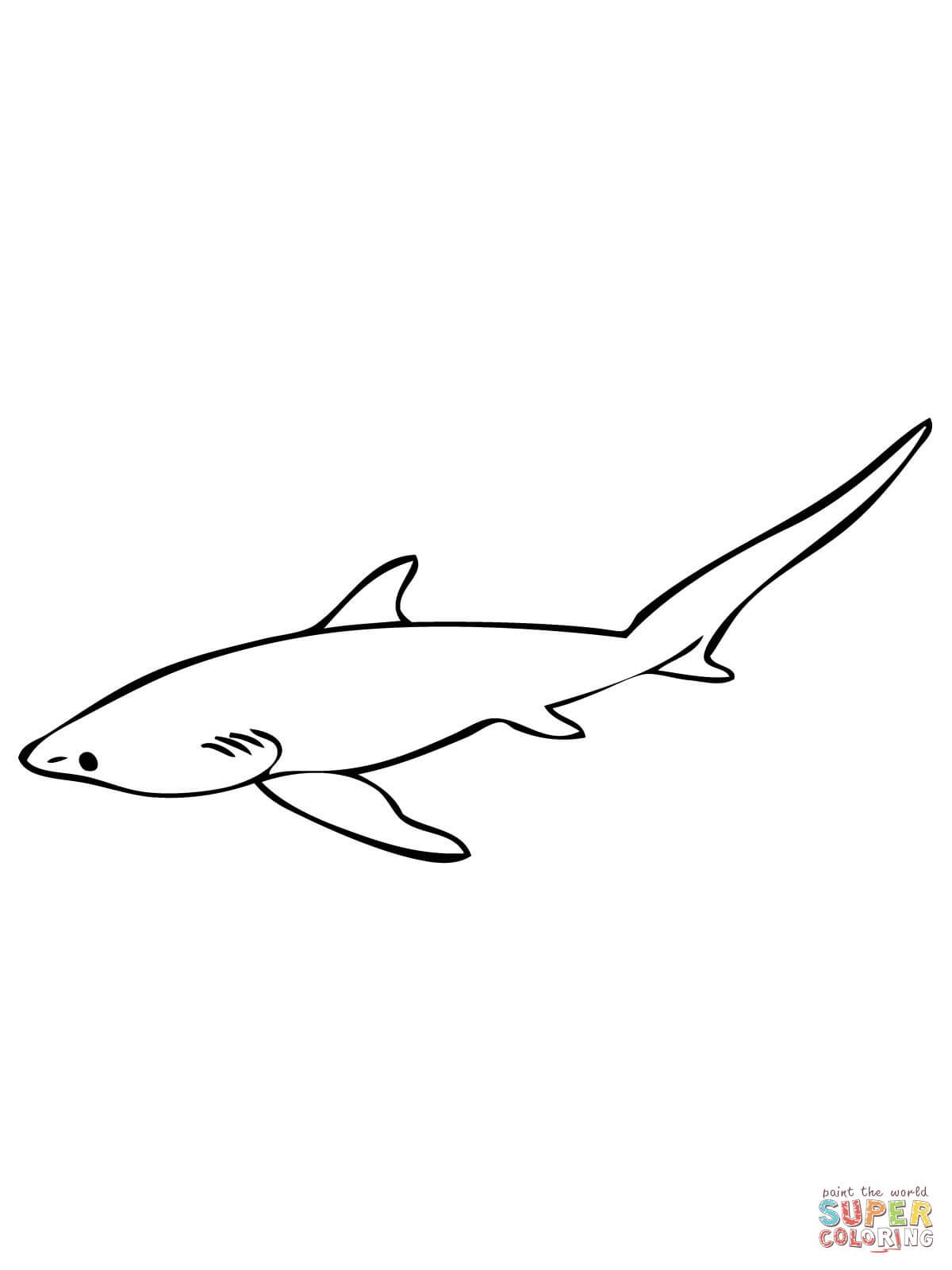 Thresher Shark Or Fox Shark Super Coloring Shark Coloring