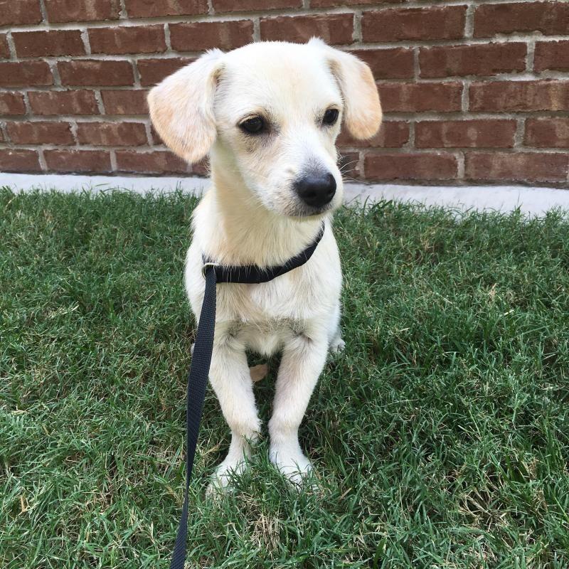 Adopt Watson on Animal rescue, Animal shelter, Pet adoption