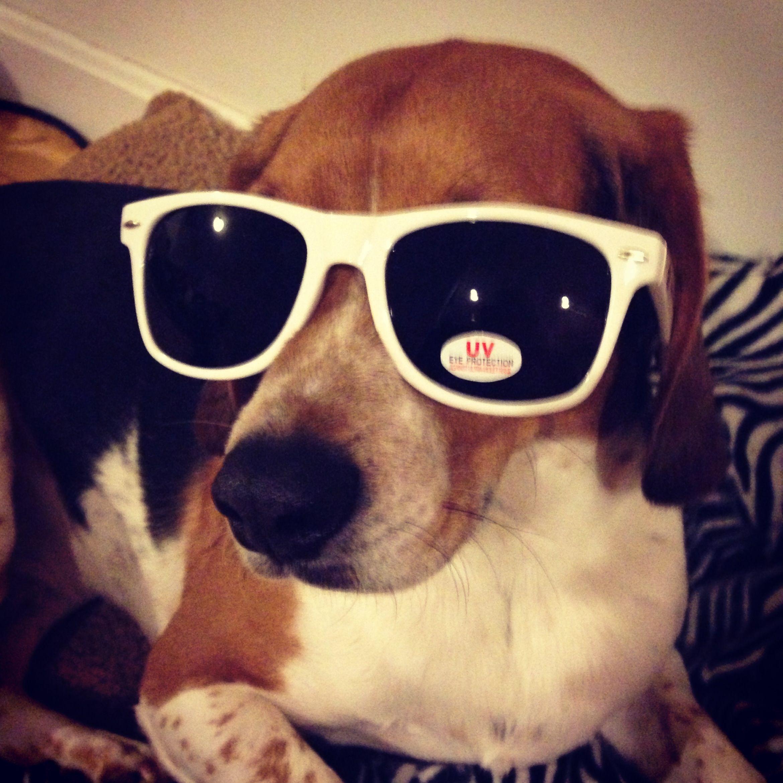 Beagle. My baby, Sparky :)
