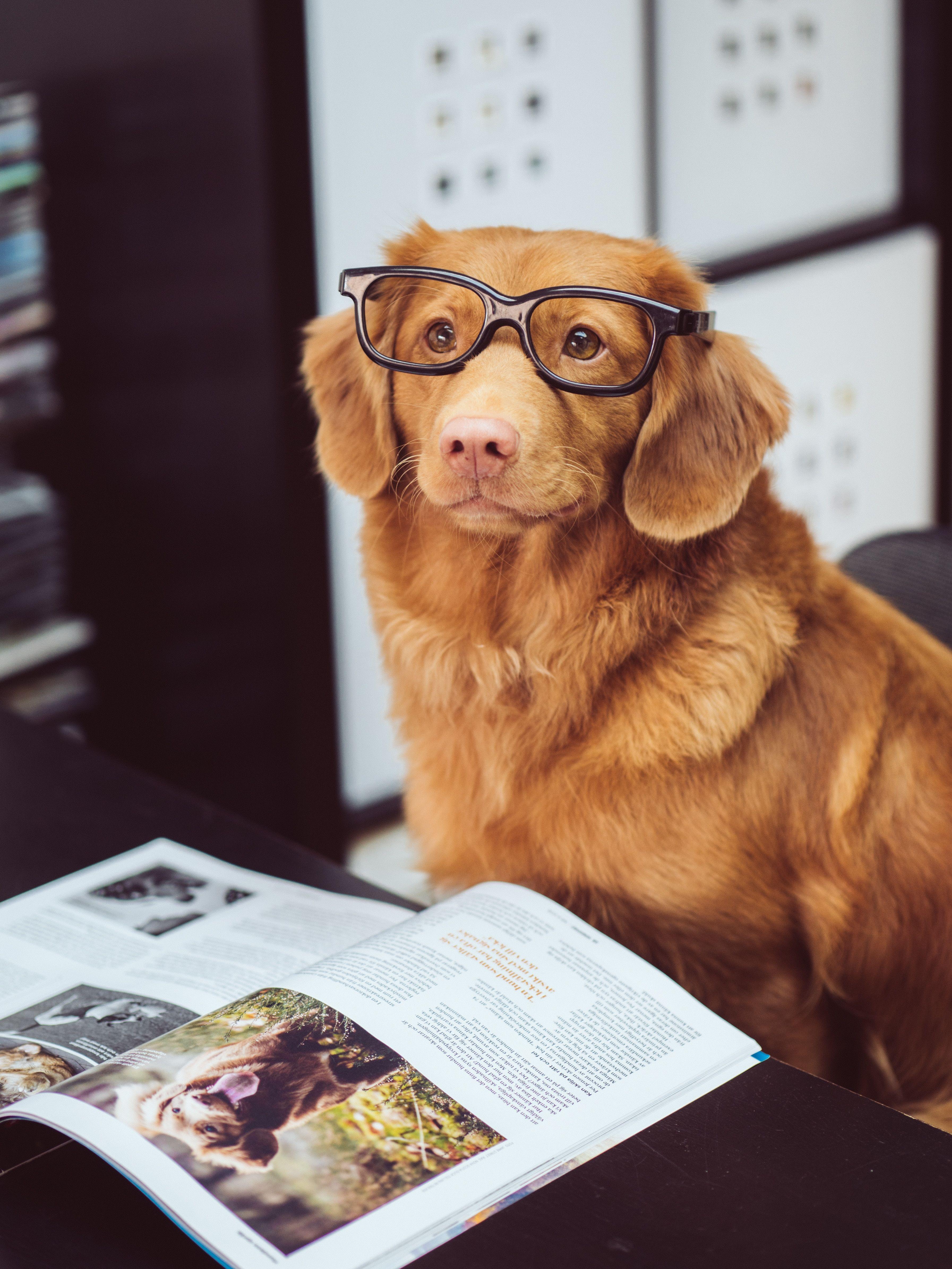 The 7 Best Dog Training Books Of 2020 Dog Sitting Cute Animals