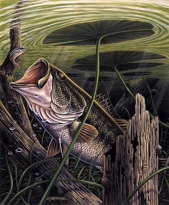 Largemouth bass fishing pinterest fish bass fishing for Bass fishing art