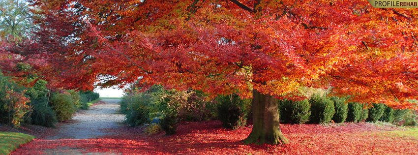 Beautiful Timeline Covers for Facebook Beautiful Autumn