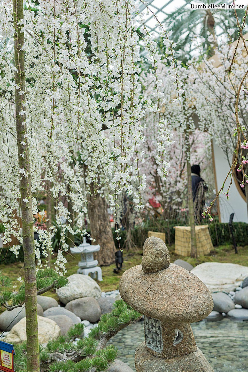 Gorgeous 20 Beautiful Cherry Blossom Garden Https Gardenmagz Com 20 Beautiful Cherry Blossom Garden Terrace Garden Design Garden Design Terrace Garden