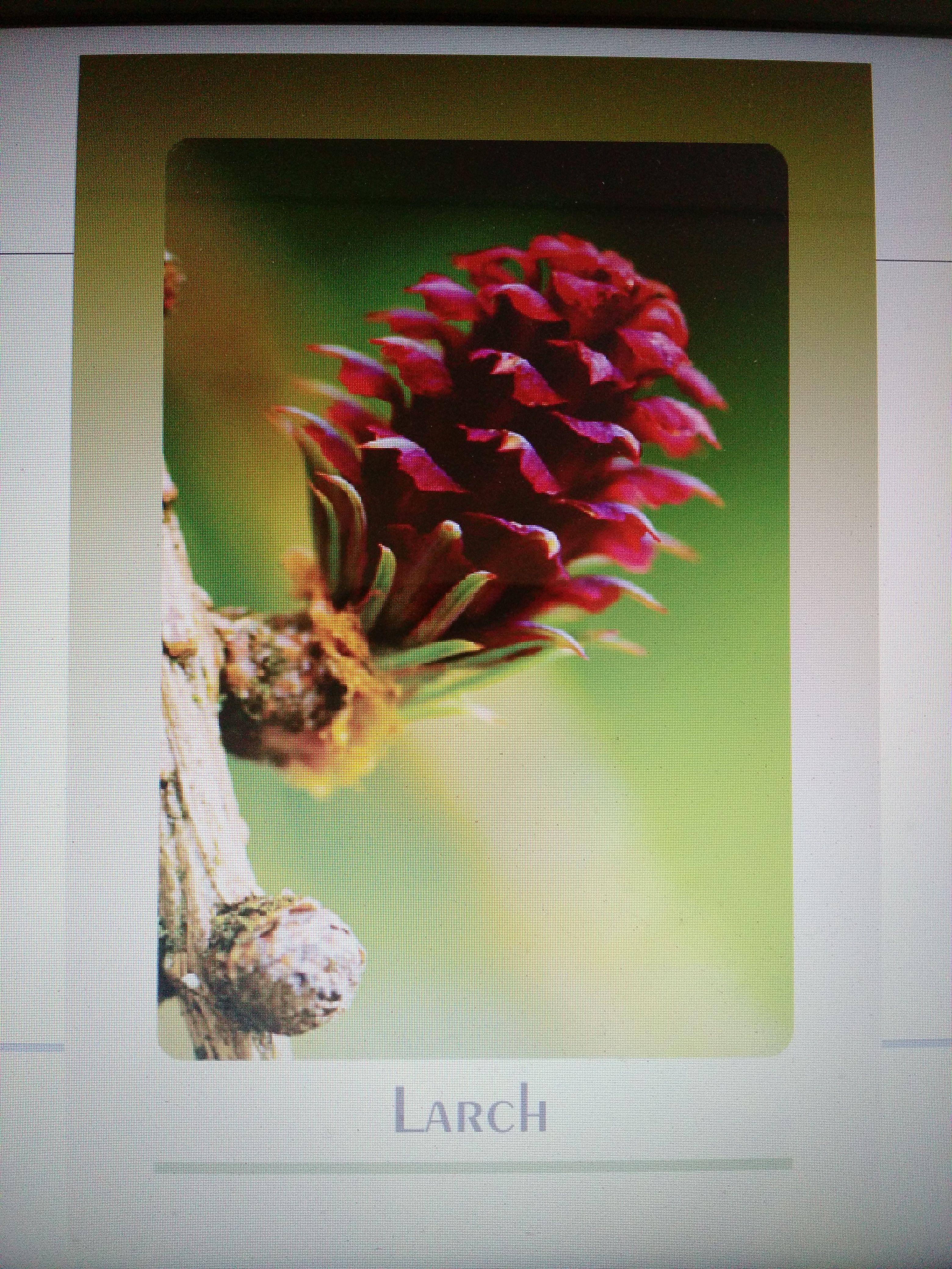 Jogo Belas Imagens Cards Florais Bach