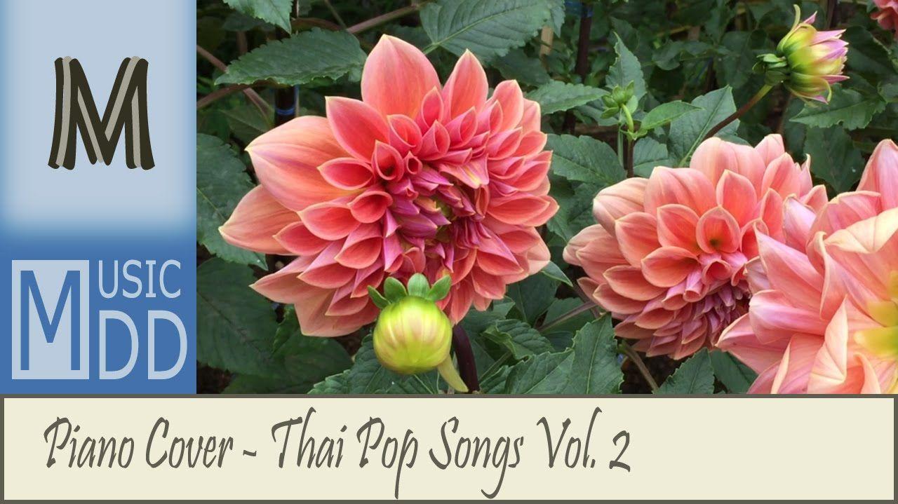 รวมเพลงดัง Cover เพราะๆ ติดหู ฟังเพลิน เปียโนบรรเลง Piano Cover Vol
