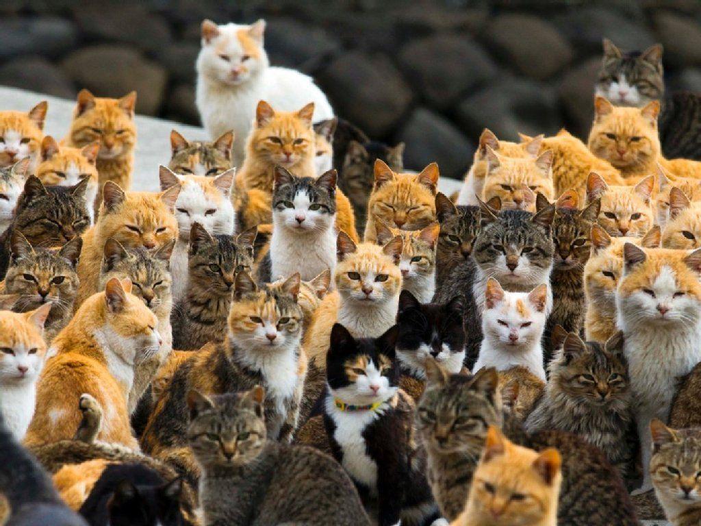 Grund für den Anstieg der Touristen sind Katzen. 120 von ihnen bevölkern die Insel. - REUTERS
