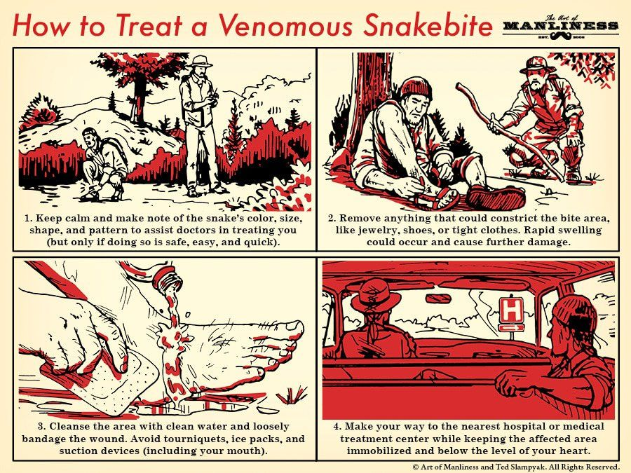 How to Treat a Venomous Snakebite | The Art of Manliness