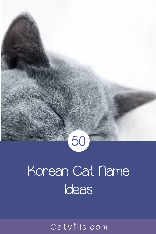 50 Elegant Korean Cat Names For Your New Kitten Catvills In 2020 Cat Names Cats Kitten