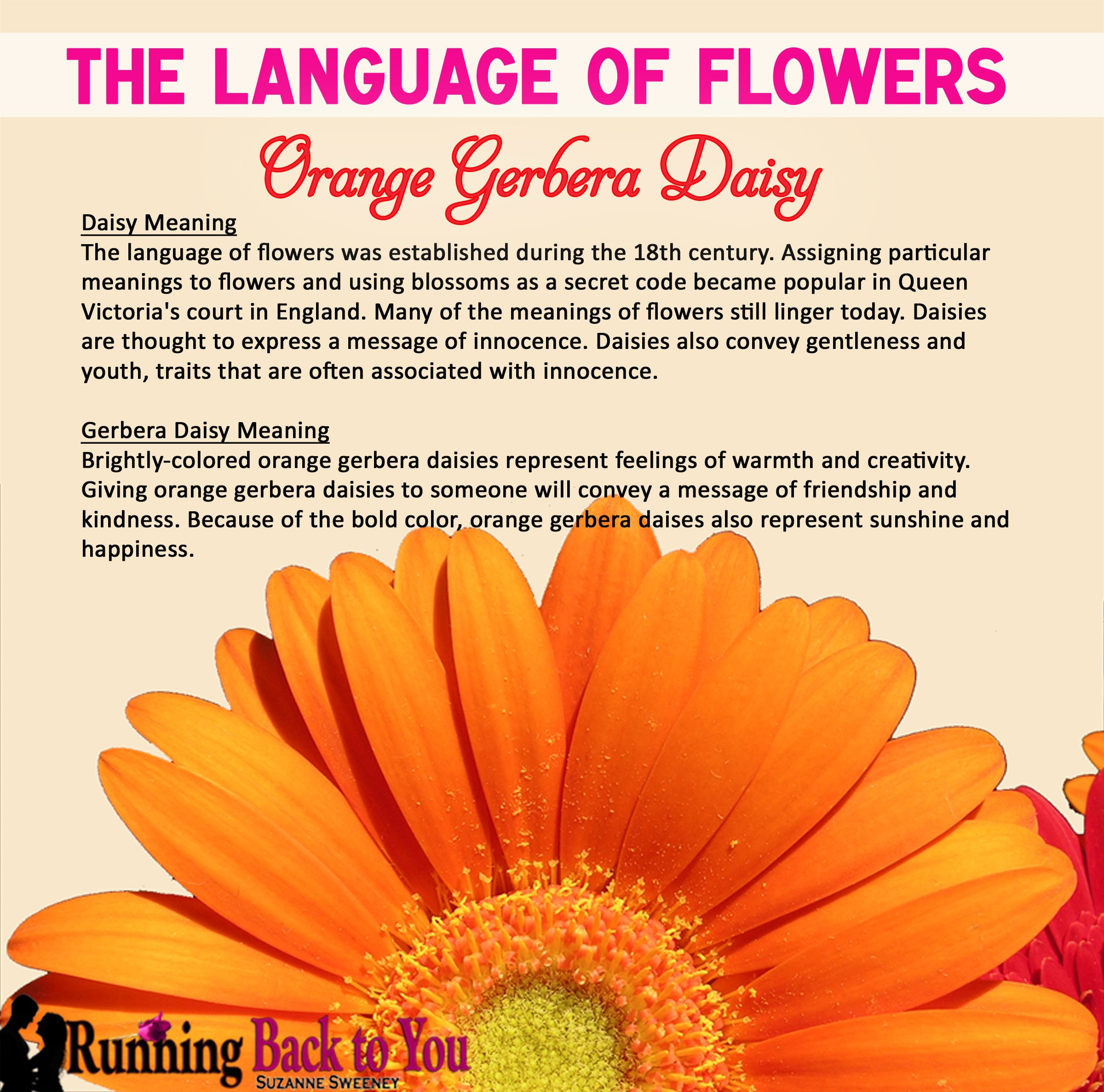 The Language Of Flowers Orange Gerbera Daisy Language Of Flowers Gerbera Daisy Flower Meanings