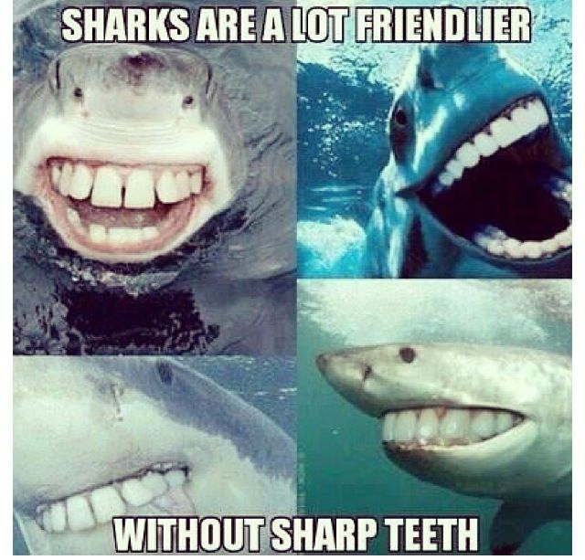 Pin By June On Dental Stuff We Like Sharks Funny Sharks With Human Teeth Funny Animals