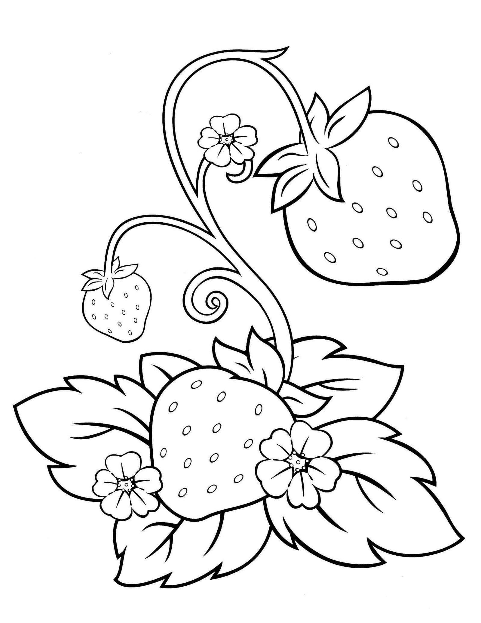 strawberry coloring and activity