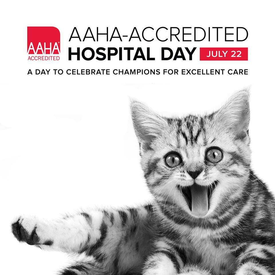 What does AAHA Accreditation mean to you? Animal